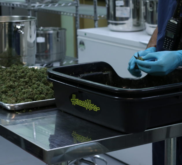 How technology is changing the budding cannabis industry
